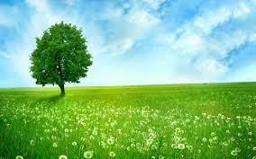 """""""Oj livado rosna travo"""""""