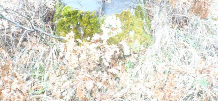 Seča šuma
